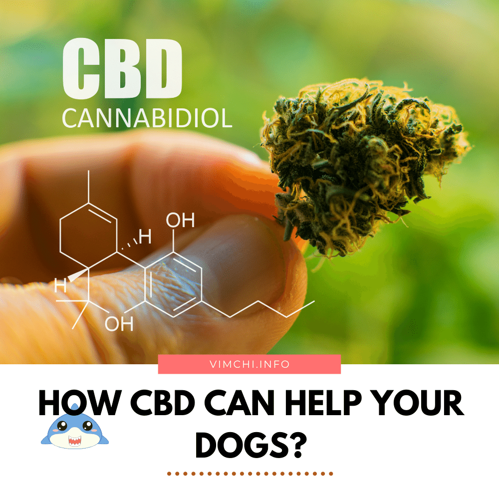 How Does CBD Help Dogs