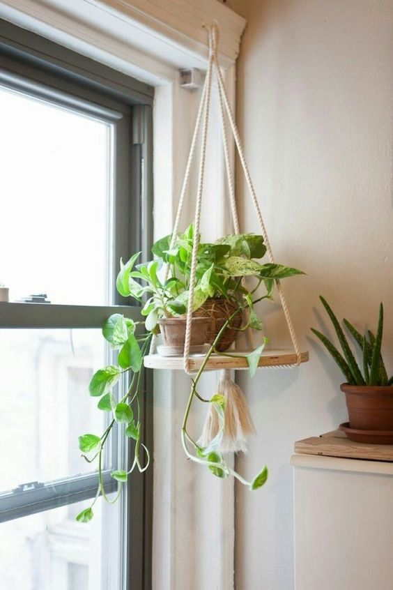 37 Indoor Hanging Plants Ideas To Decorate Your Home ... on Hanging Plants Ideas  id=81791