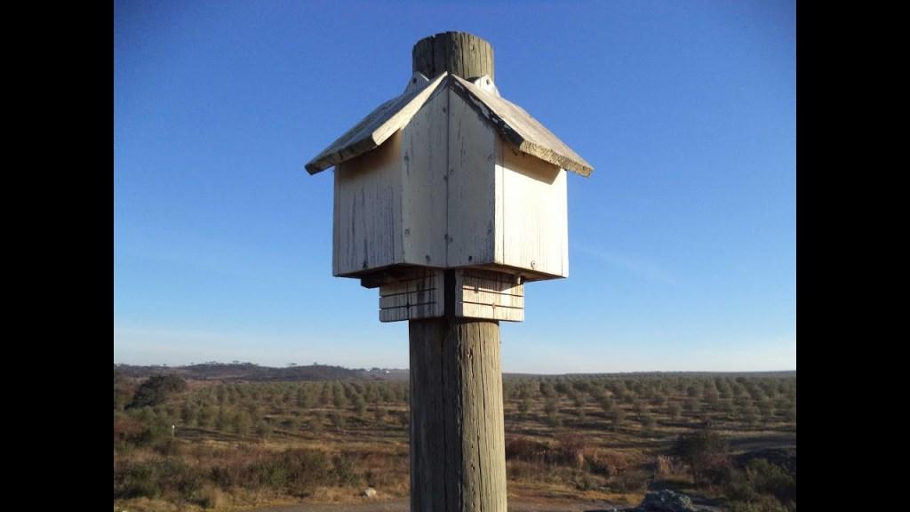Boîtes à chauves-souris surplombe le vignoble de Herdade do Esporão au Portugal