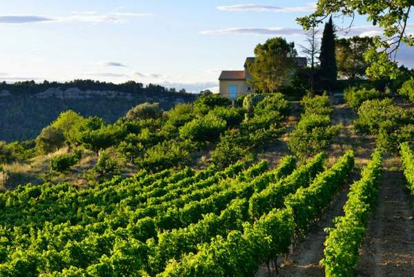 Vignobles en Provence Région viticole Journée typique dans les Coteaux Varois en Provence