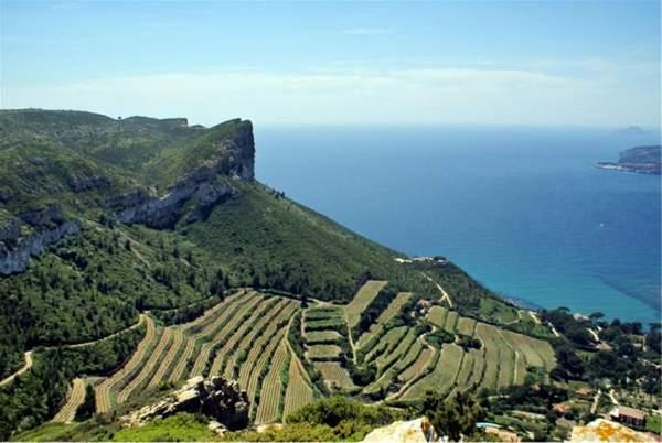 Vignoble de Cassis réputé pour ses blancs de vin de Provence