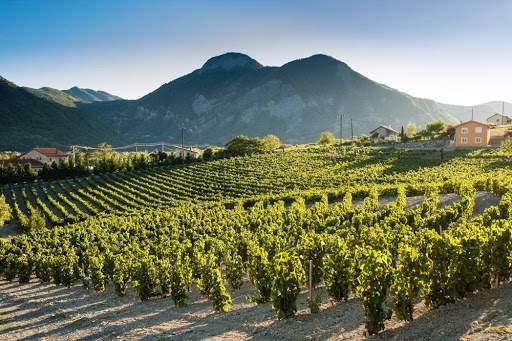 Vin de Provence dans le vignoble et AOC Pierrevert