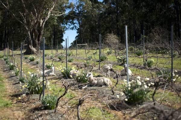 viticulture biodynamique vignoble