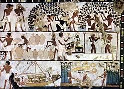 La viticulture et la vinification dans l'Égypte ancienne (environ 1 500 av. J.-C.)