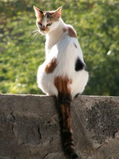 Du vinaigre pour éloigner les chats et les empêcher de faire dans votre jardin