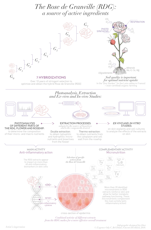 Infographie Dior