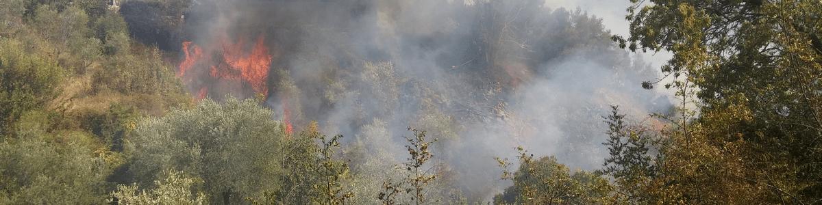 AIB (antincendio boschivo): i diversi tipi di vegetazione