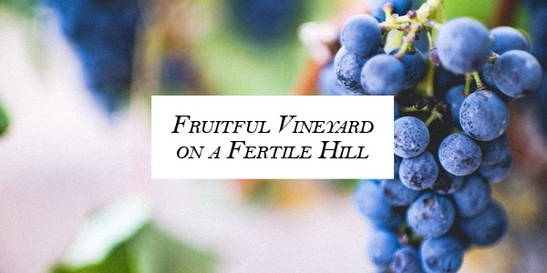 Fruitful Vineyard on a Fertile Hill