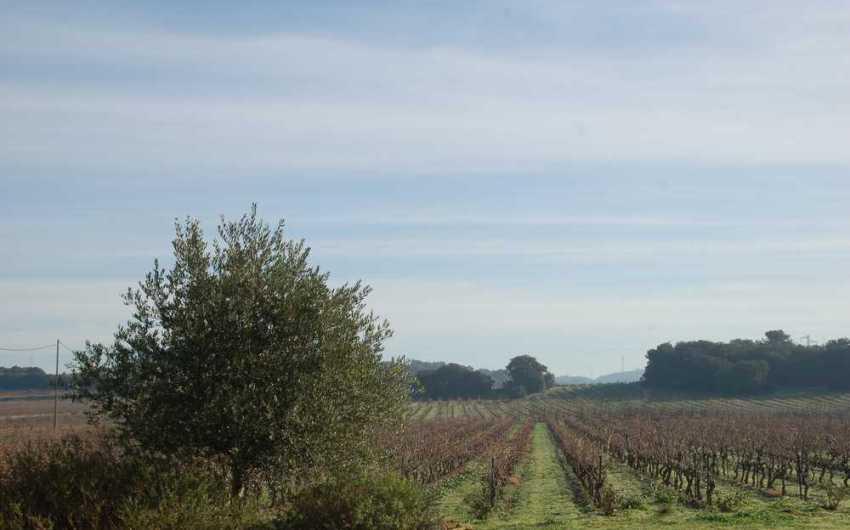 acheter vignoble corbieres