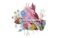 Vetusta Morla consiguen su segundo #1 en España, con 'Mismo Sitio, Distinto Lugar'