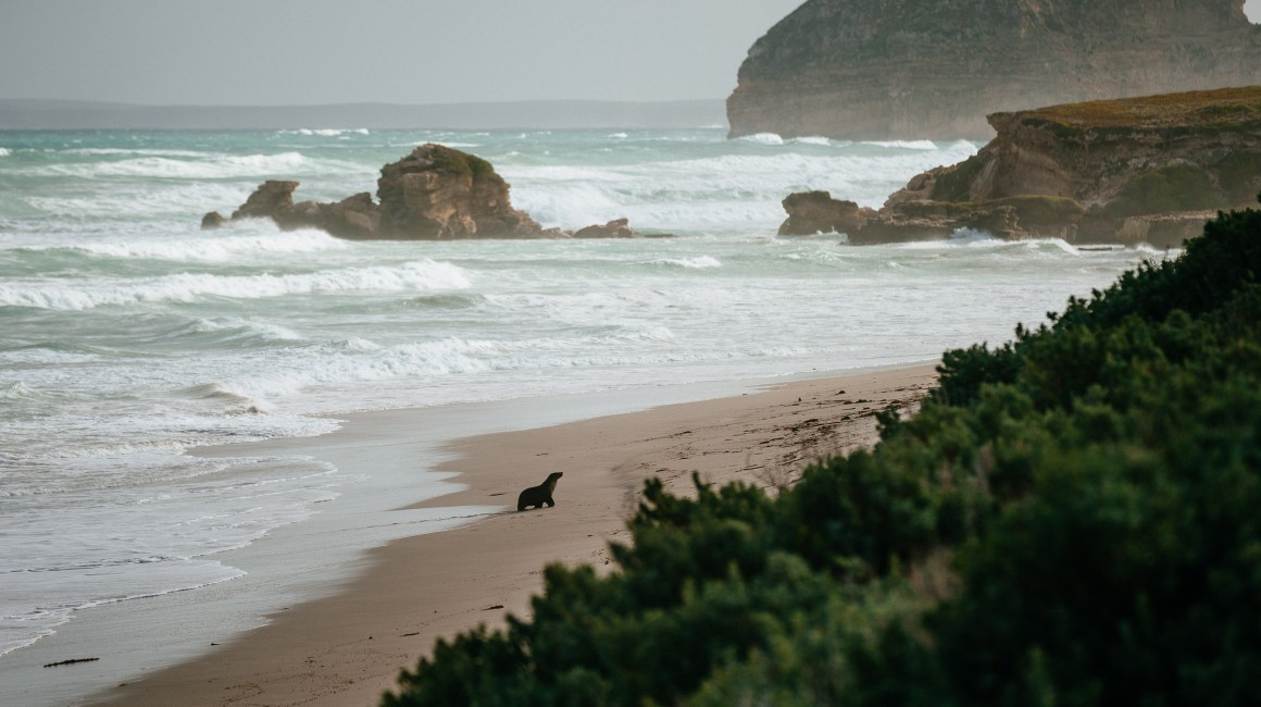 Kangaroo Island, Australia, Travel Photography, Vin Images