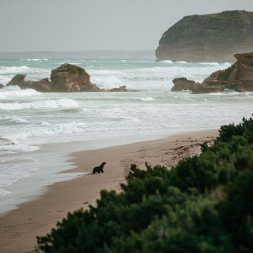 Kangaroo Island, Australia, Travel Photography, Vin Images