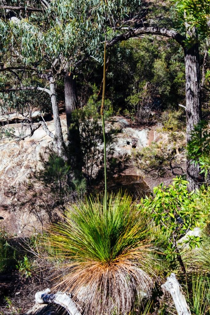 Royal National Park, Australia, Travel Photography, Vin Images