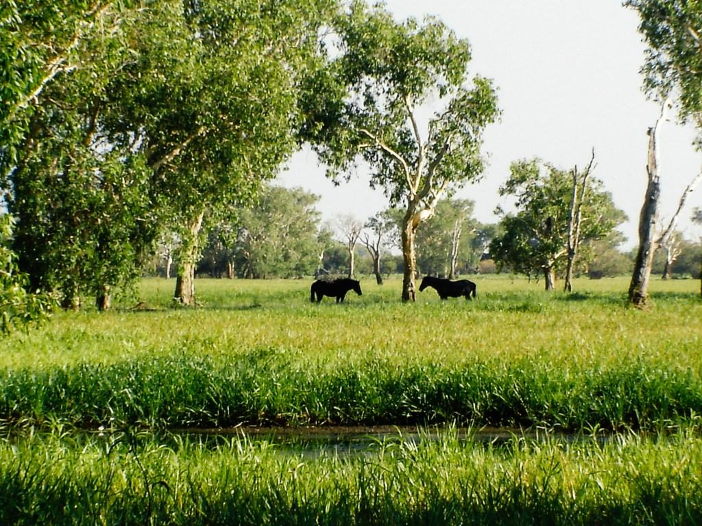 Kakadu National Park, Australia, Travel Photography, Vin Images