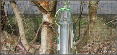 saft fra birketræ