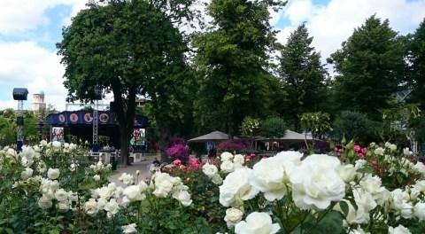 Tivoli flowers