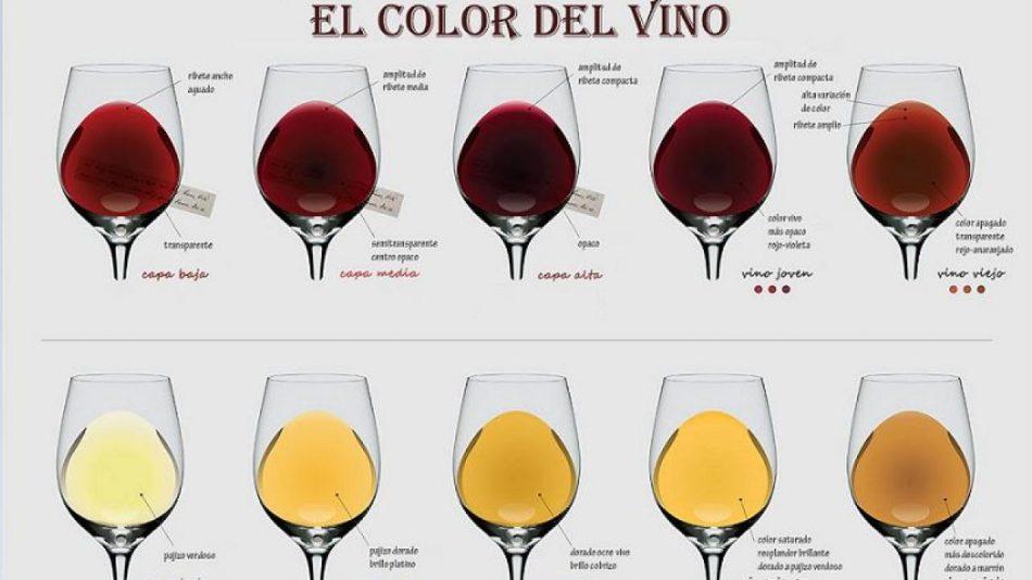 10 infografías imprescindibles sobre vinos - vinopack