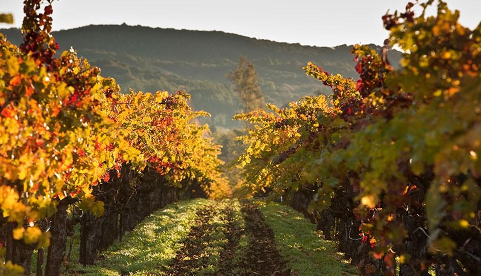 vinos-dulces-california