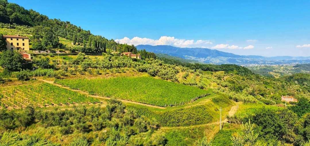 Panorama dal giardino di Villa Santo Stefano