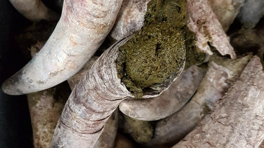 Pratica del cornoletame nell'agricoltura biodinamica