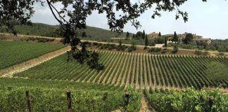 Castelina in Chianti