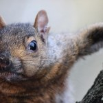 Vanier College Conspiracies: The Problem with Squirrels