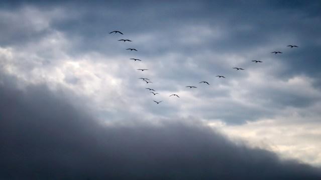 Tales of Tall Birds
