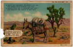 Very Funny vintage Arizona Desert Postcard