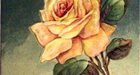 Vintage Yellow Roses Valentine's Day Postcard