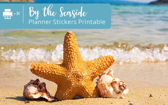 sea, starfish and shells