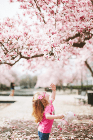 little girl looking at cherry blossoms