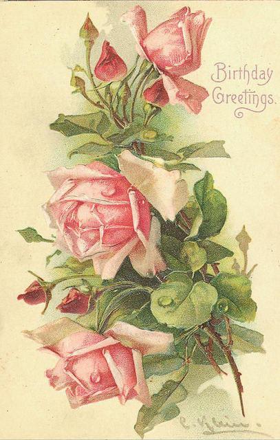 Vintage Images - Pink Roses Postcard - Catherine Klein