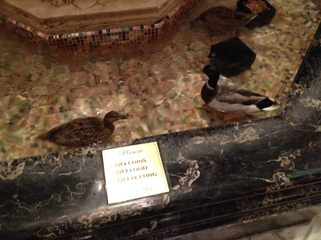 Peabody Ducks at Memphis Hotel