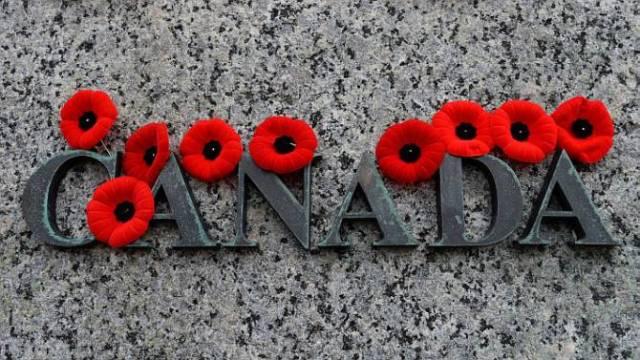 Canada Poppy