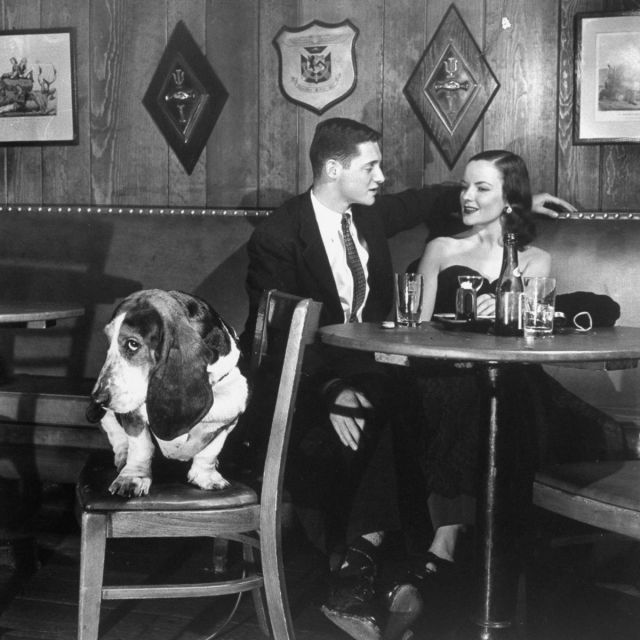 1950s vintage image of couple with dog