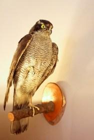 Vogel bei DECO ARTS