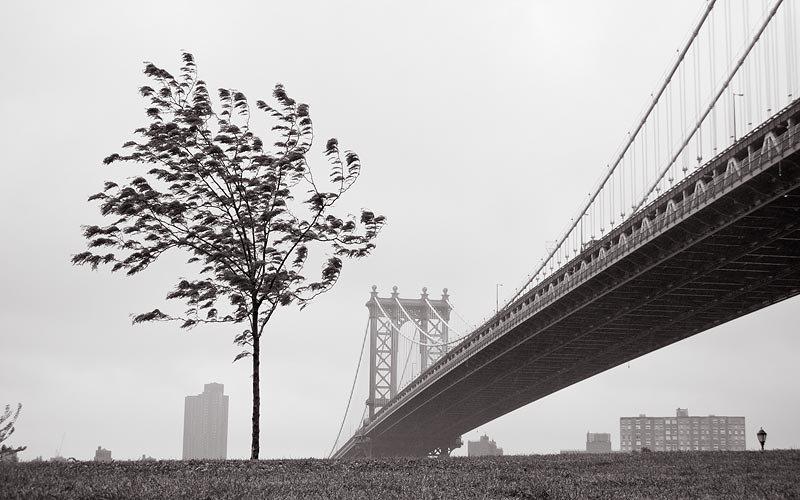 Ένα δέντρο μεγαλώνει στο Μπρούκλιν