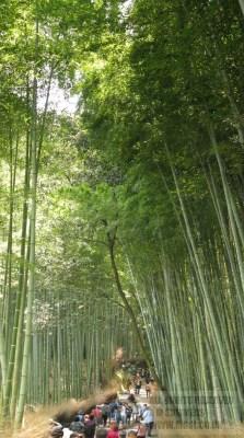 Bamboo grove, Arashimaya