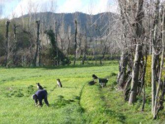 Vinho Verde DOC, Land des grünen Weins