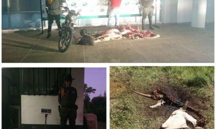 Carabineros capturaron en flagrancia a un hombre por el delito de abigeato en zona rural de Yopal