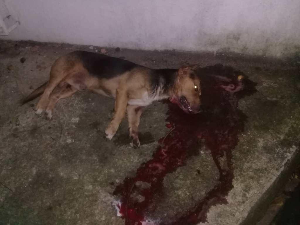 """Los están matando. Un can fue hallado muerto en una banqueta del barrio """"El Gaván"""". Según los habitantes del sector, habría sido envenenado."""