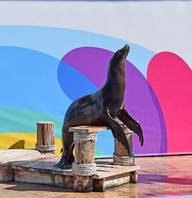 Sea Lion Show, Gulf World, Panama City Beach, FL