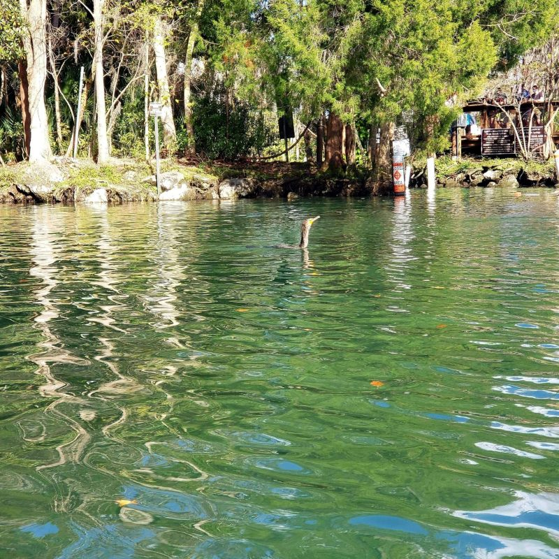 Three Sisters Springs, Crystal River, Florida
