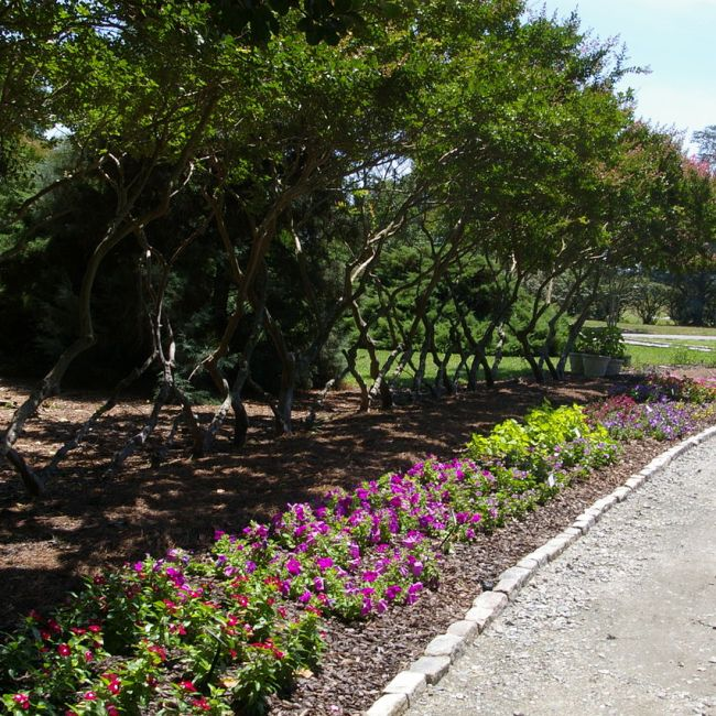 Norfolk Botanical Garden, Norfolk, Virginia (Photo Credit: Wikipedia)