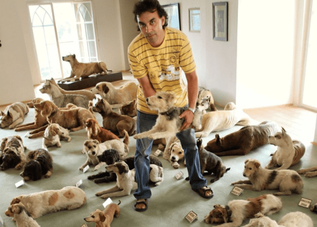 man with a lot of different dogs in a room