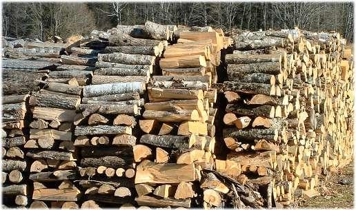 Три полицейски производства са образувани за съхранение и транспортиране на незаконно добита дървесина