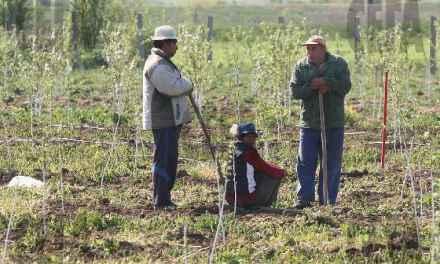 12 бизнес-плана по мярка 6.3 от Програма за развитие на селските райони са подадени от собственици на малки животновъдни стопанства в региона