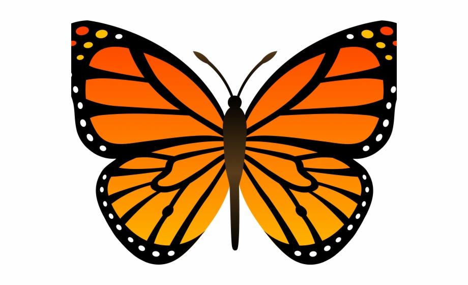 Butterfly Design Clipart Butterfly Outline Monarch Butterfly Easy Drawing Transparent Png Download 4677490 Vippng
