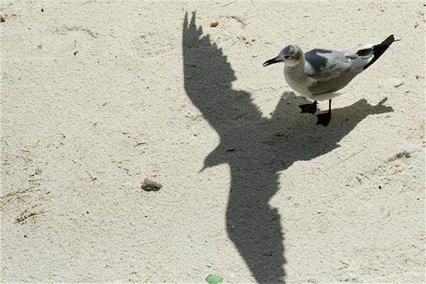 23幅照片中的影子,巧合地告訴你一個不同的故事