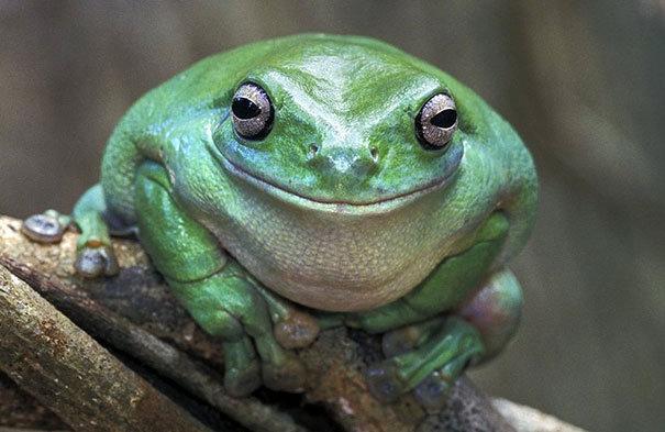23隻全世界最開心的動物,看完你也會笑出來!